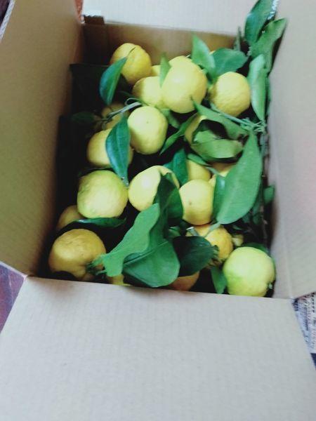 柚子の木を切った_c0162128_22092277.jpg