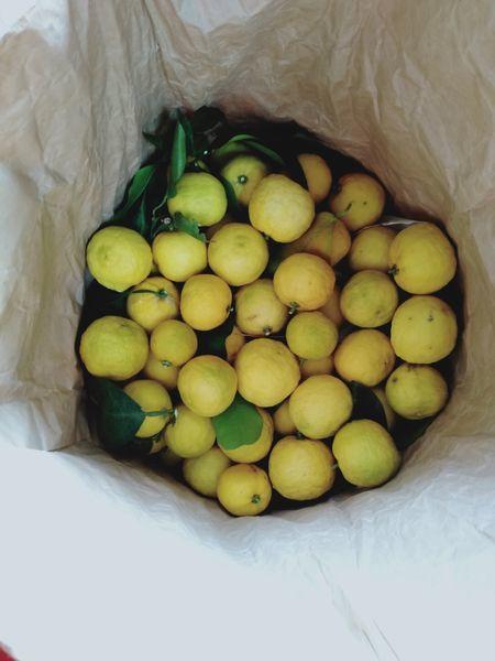 柚子の木を切った_c0162128_22092295.jpg