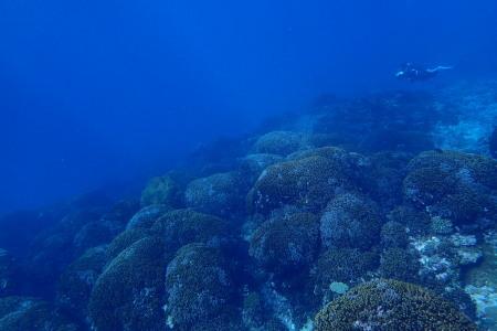 19.12.22 太平洋をドボン。_b0100730_21504265.jpg