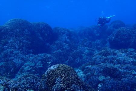 19.12.22 太平洋をドボン。_b0100730_21554572.jpg