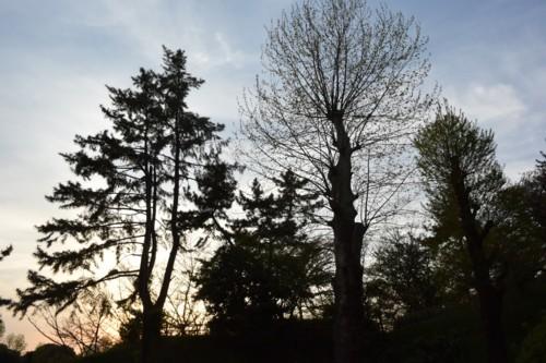 葉の落ちた木のシルエット_f0055131_12105725.jpg