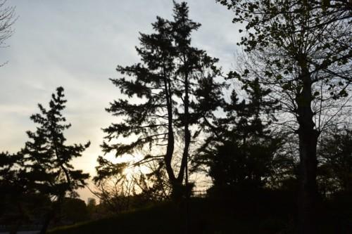 葉の落ちた木のシルエット_f0055131_12110816.jpg