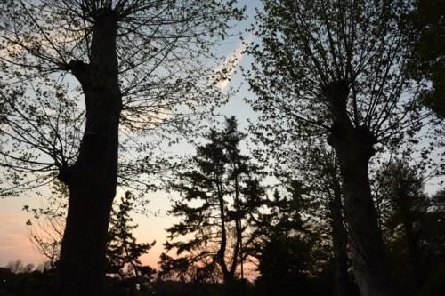 葉の落ちた木のシルエット_f0055131_12111602.jpg