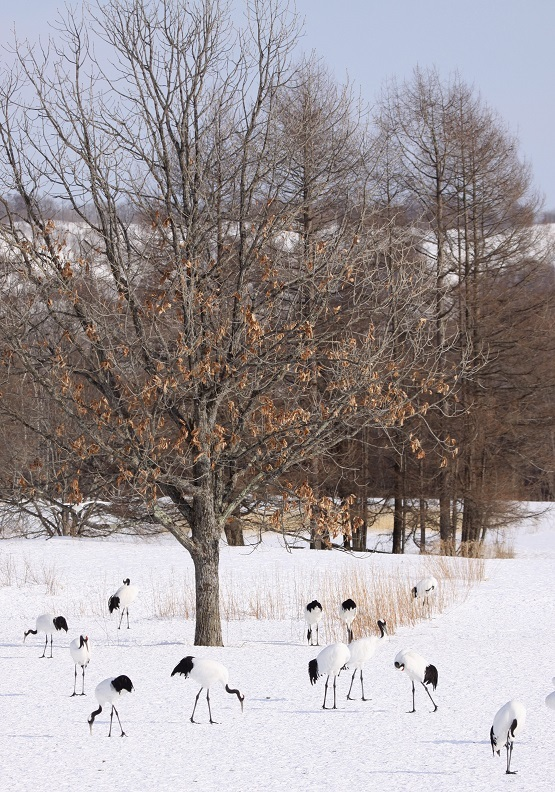 雪がないって言ってたら 12月22日_f0113639_16413329.jpg