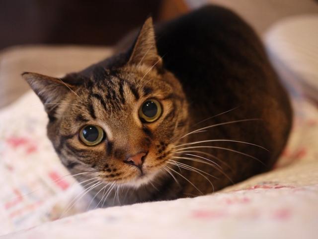 猫のお留守番 ララちゃん編。_a0143140_22230866.jpg