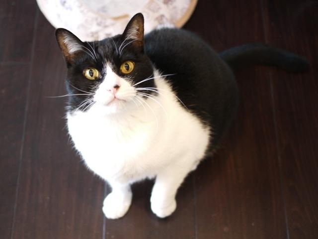 猫のお留守番 ピケちゃん編。_a0143140_22273585.jpg