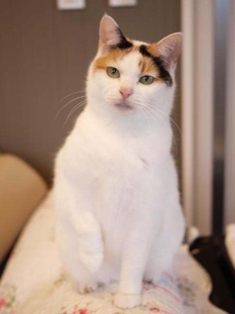 猫のお留守番 エンジェルちゃん編。_a0143140_22335668.jpg