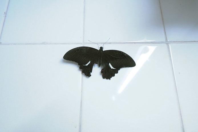 KLバタフライパークのトイレにて_d0149245_17264221.jpg
