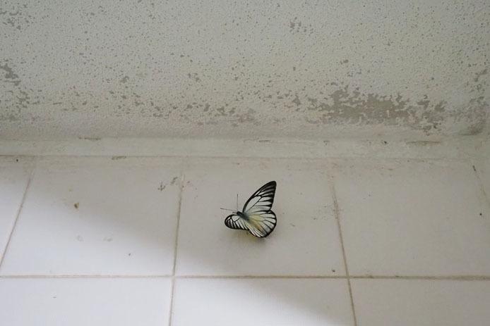 KLバタフライパークのトイレにて_d0149245_17265364.jpg