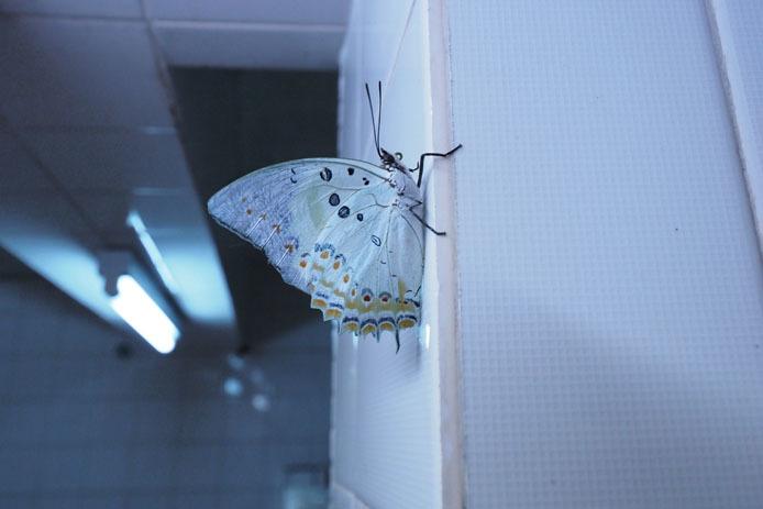 KLバタフライパークのトイレにて_d0149245_17270995.jpg