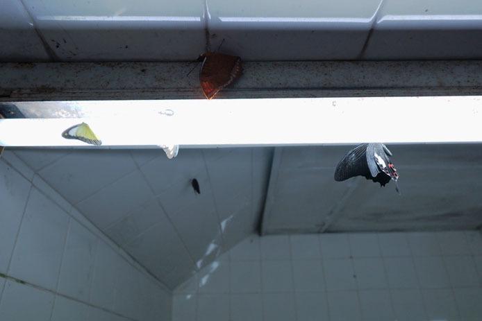 KLバタフライパークのトイレにて_d0149245_17272555.jpg