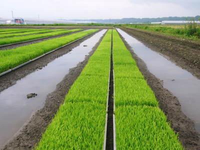 熊本の美味しいお米(七城米、菊池水源棚田米、砂田のれんげ米)大好評発売中!こだわり紹介 その1_a0254656_16162287.jpg