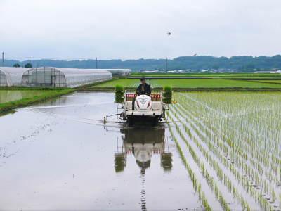 熊本の美味しいお米(七城米、菊池水源棚田米、砂田のれんげ米)大好評発売中!こだわり紹介 その1_a0254656_16232013.jpg