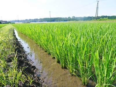 熊本の美味しいお米(七城米、菊池水源棚田米、砂田のれんげ米)大好評発売中!こだわり紹介 その1_a0254656_16274329.jpg