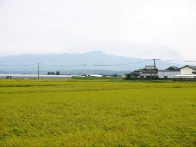 熊本の美味しいお米(七城米、菊池水源棚田米、砂田のれんげ米)大好評発売中!こだわり紹介 その1_a0254656_16295470.jpg
