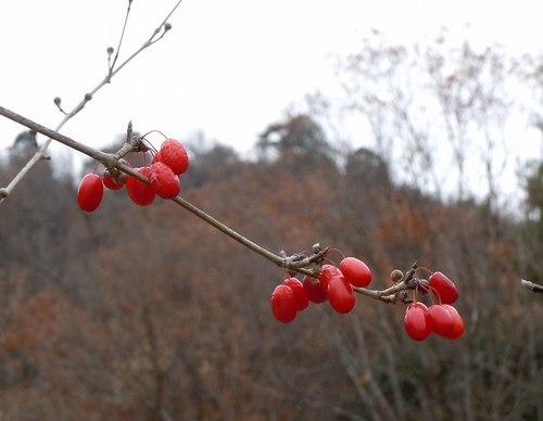鮮やかな赤と静寂に包まれる公園_b0102572_16044212.jpg