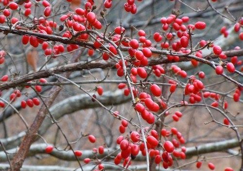 鮮やかな赤と静寂に包まれる公園_b0102572_16050650.jpg