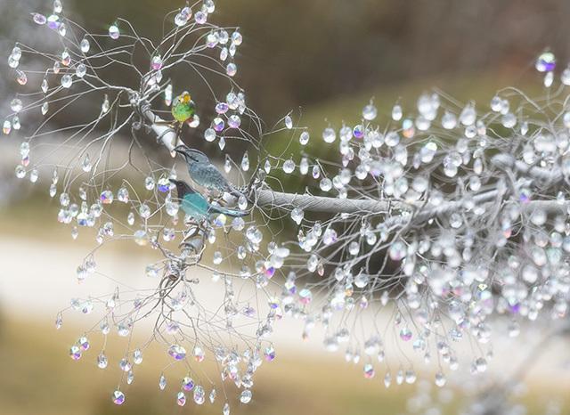箱根ガラスの森美術館のクリスタルガラスのクリスマスツリー 昼編_b0145398_22263659.jpg