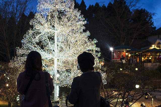 箱根ガラスの森美術館クリスタルガラスのクリスマスツリー 夜編_b0145398_23104808.jpg