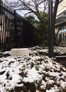 雪です。_c0039501_19073686.jpeg