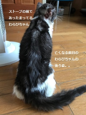 わらびちゃん、旅立ちました・・_f0242002_20103759.jpg