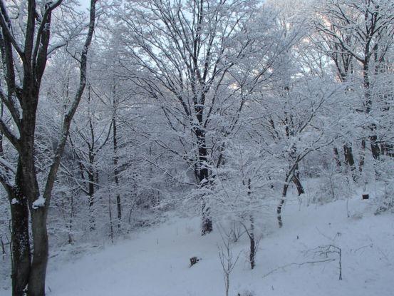 初雪_f0064906_14242959.jpg