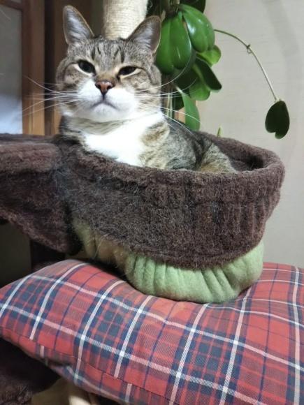 猫壺イン_f0316507_18303468.jpg