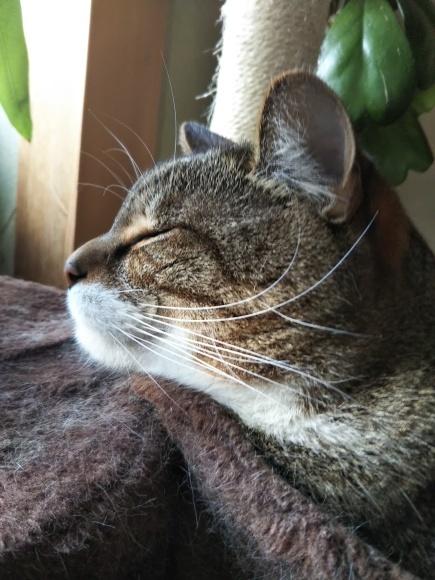 猫壺イン_f0316507_18323580.jpg