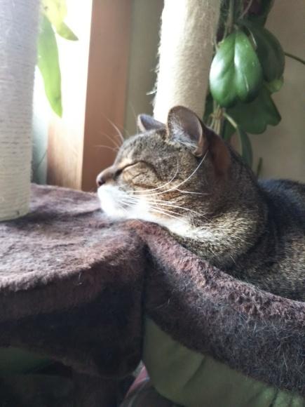 猫壺イン_f0316507_18324786.jpg