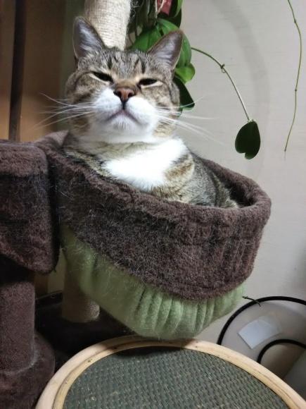 猫壺イン_f0316507_18332451.jpg