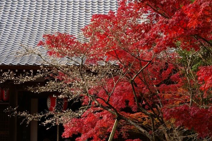 赤山禅院_e0177413_19395183.jpg