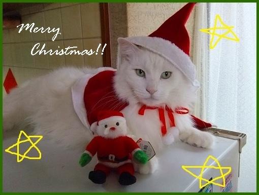 レオ君のクリスマス_a0134114_18454810.jpg