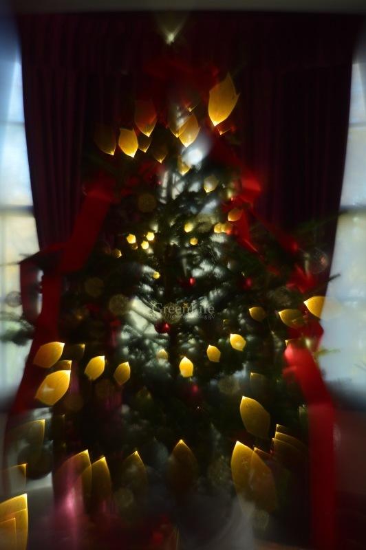 西洋館のクリスマス(外交官の家)_f0321522_20382801.jpg