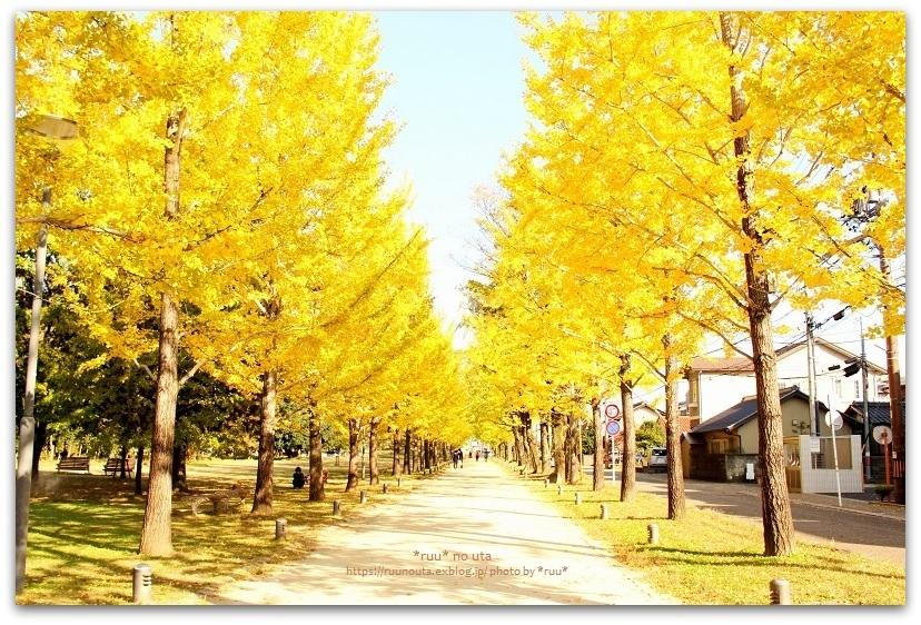 ブログテーマ「秋と言えば紅葉!みんなに見せたい秋の風景ショット2019 」第2段_f0357923_10150178.jpg