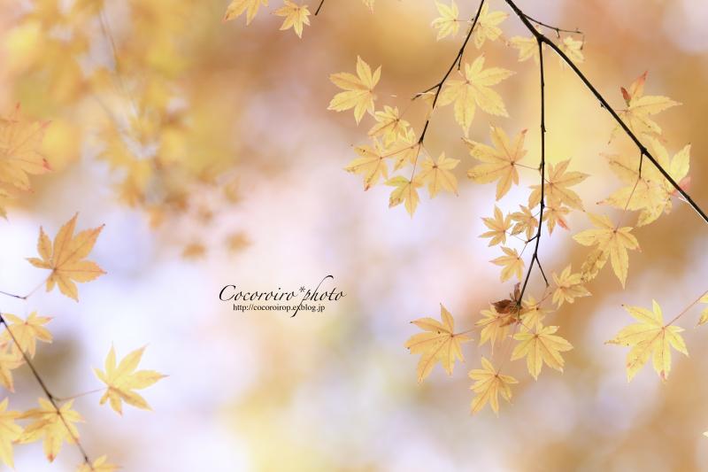 ブログテーマ「秋と言えば紅葉!みんなに見せたい秋の風景ショット2019 」第2段_f0357923_10552819.jpg