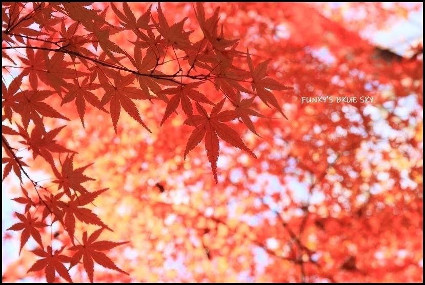 ブログテーマ「秋と言えば紅葉!みんなに見せたい秋の風景ショット2019 」第2段_f0357923_11165667.jpg