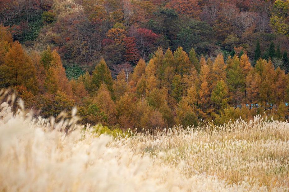 ブログテーマ「秋と言えば紅葉!みんなに見せたい秋の風景ショット2019 」第2段_f0357923_11334877.jpg