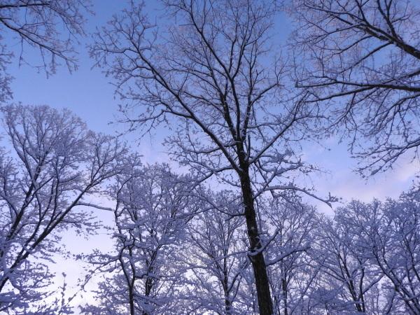 積雪約15cm!ノーマルタイヤでは危険です(2019年12月23日)_b0174425_07064084.jpg