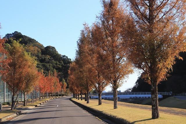 大白公園 紅葉散策(撮影:12月8日)_e0321325_16062327.jpg