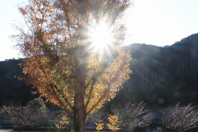 大白公園 紅葉散策(撮影:12月8日)_e0321325_16065149.jpg