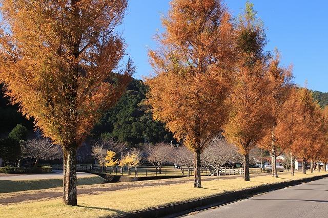大白公園 紅葉散策(撮影:12月8日)_e0321325_16070543.jpg