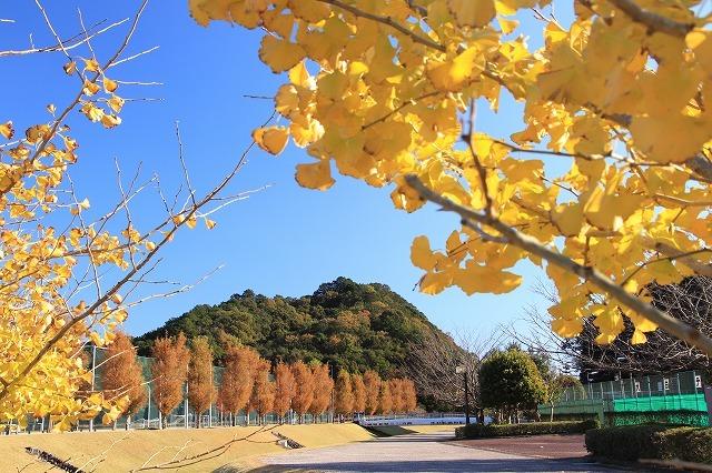大白公園 紅葉散策(撮影:12月8日)_e0321325_16071963.jpg