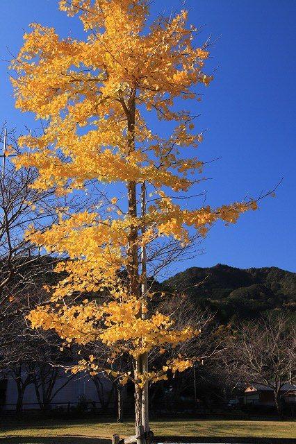 大白公園 紅葉散策(撮影:12月8日)_e0321325_16075775.jpg