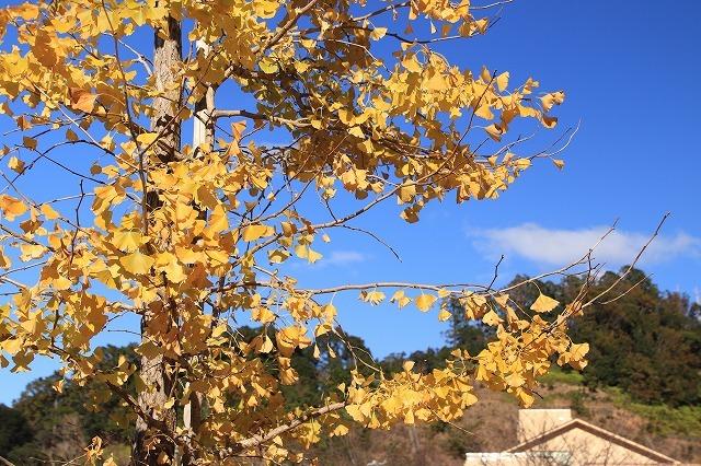 大白公園 紅葉散策(撮影:12月8日)_e0321325_16080981.jpg