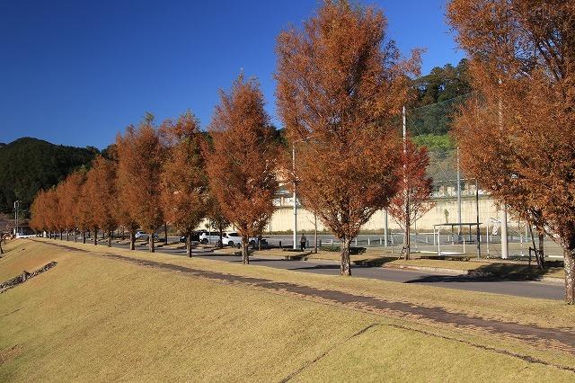 大白公園 紅葉散策(撮影:12月8日)_e0321325_16085725.jpg