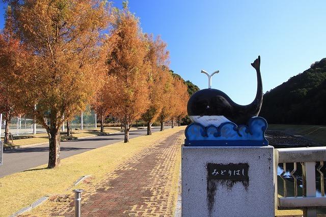 大白公園 紅葉散策(撮影:12月8日)_e0321325_16092193.jpg