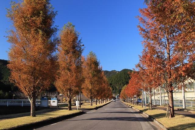 大白公園 紅葉散策(撮影:12月8日)_e0321325_16093838.jpg
