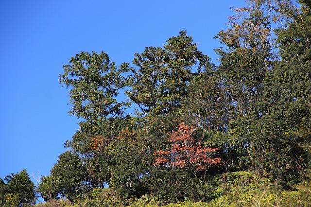 大白公園 紅葉散策(撮影:12月8日)_e0321325_16100348.jpg