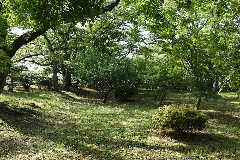国宝・彦根城を歩く。 その7 <大手門~山崎曲輪>_e0158128_21163744.jpg