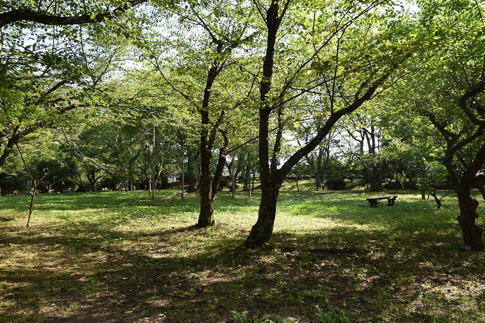 国宝・彦根城を歩く。 その7 <大手門~山崎曲輪>_e0158128_21171149.jpg